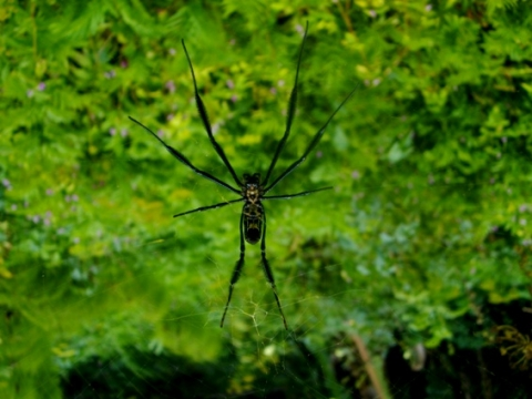 Spiders also live in forests