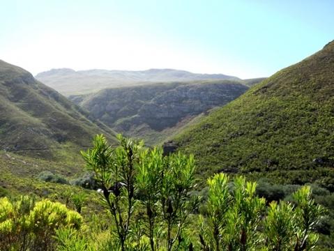 Fynbos slopes