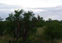 Peace in the bushveld
