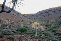Home of tree aloes